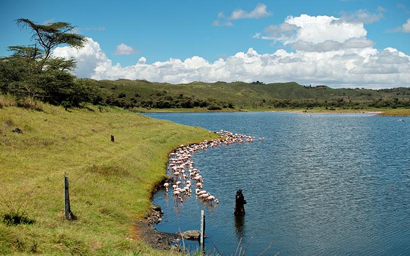 Arusha Milli Parkı
