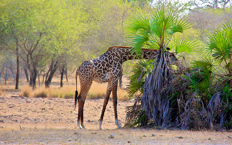 Selous Vahşi Yaşam Alanı