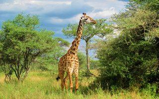 Tanzanya görülecek yerler