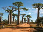 Baobab-Road-Madagascar