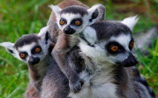 Madagascar-Gezilecek-Yerler
