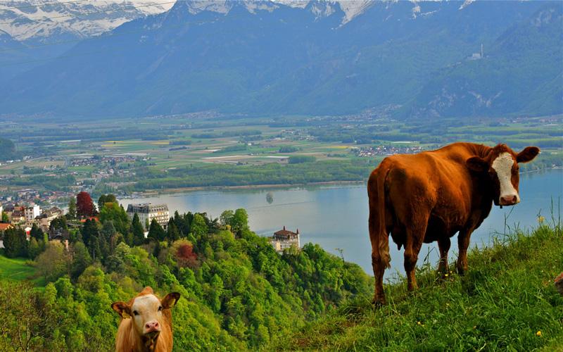 Montreux-Isvicre