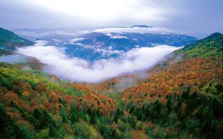 Yenice Orman Yolu Karabük