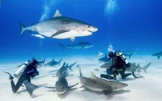 Köpekbalıklarıyla Yüzme Maldivler