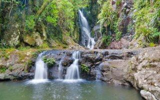 Lamington Ulusal Parkı Brisbane