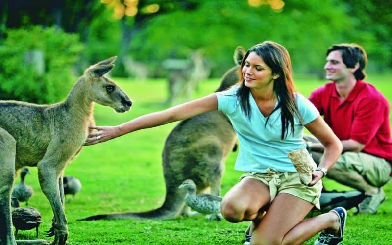 Lone Pine Koala Koruma Bakımevi Brisbane