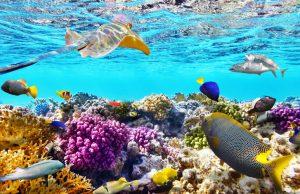 büyük set resifini keşfetmenin yolları