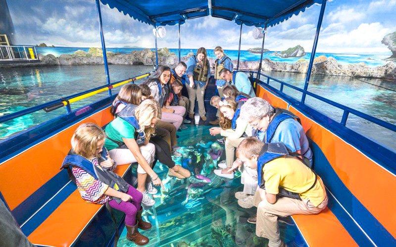 cam tabanlı tekneler büyük set resifi