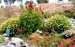 Dikili-Botanik-Bahce