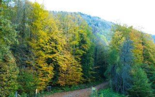 Turkiye-Trekking-Rotalari-Yenice-Ormanlari